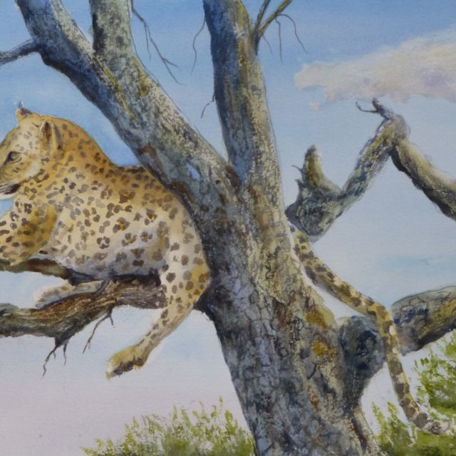 Leopard, Watching Namibian Leopard sprawled in the branches of a dead tree - Watercolour Painting