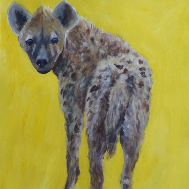 Hyena young inquisitive cuddly Hyena looking over its shoulder - Acrylic Painting