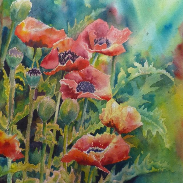 Oriental Poppies flowers, buds and seedheads - Floral Watercolour Paintings