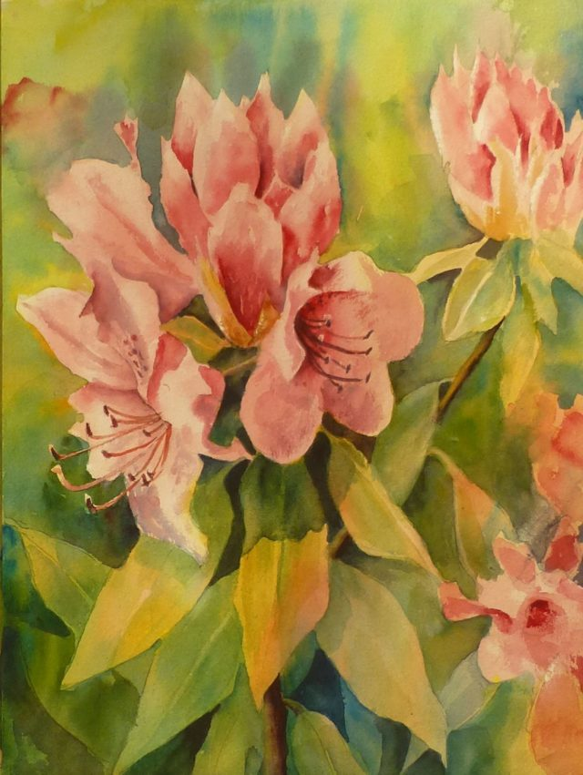 Rhododendrons in Bloom flowers- Floral Watercolour Paintings