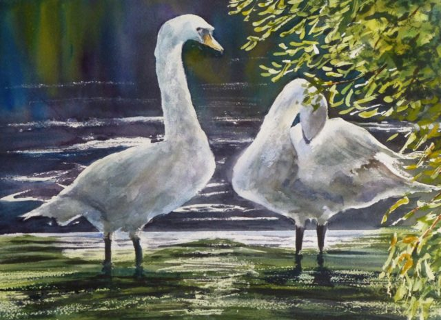 On the Weir two swans standing on a waterfall in sunlight and preening - Watercolour Painting