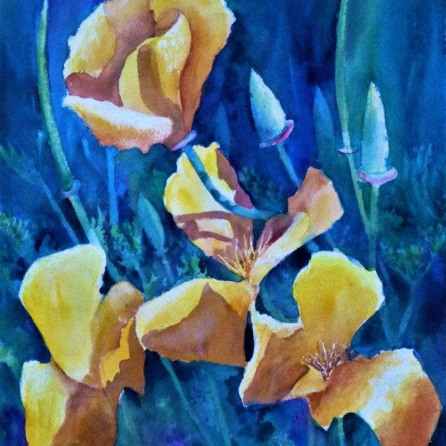 Eschschlozia flowers and buds in Shade - Floral Watercolour Painting