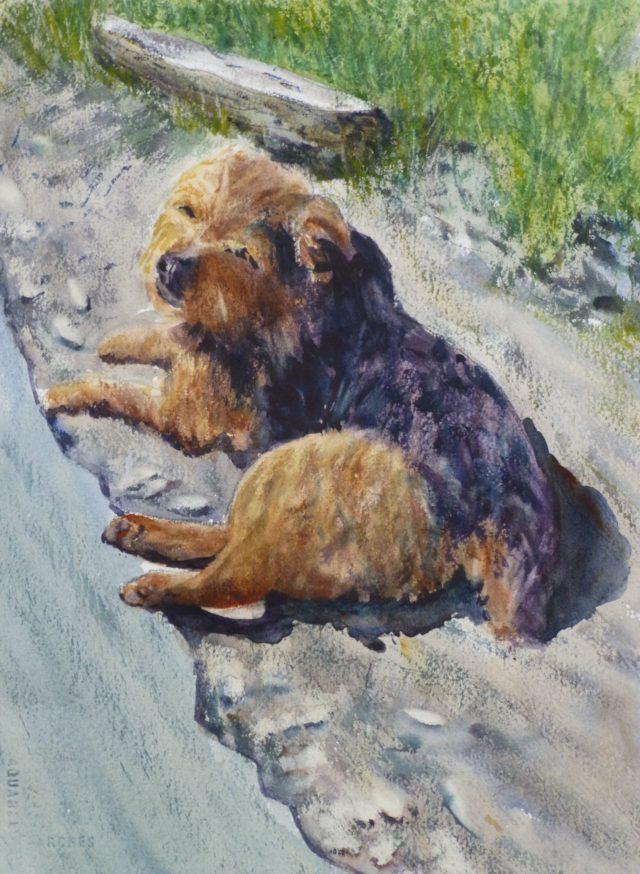 Awaiting Some Attention Yorkshire terrier lying by side of road - Watercolour Painting of Dogs