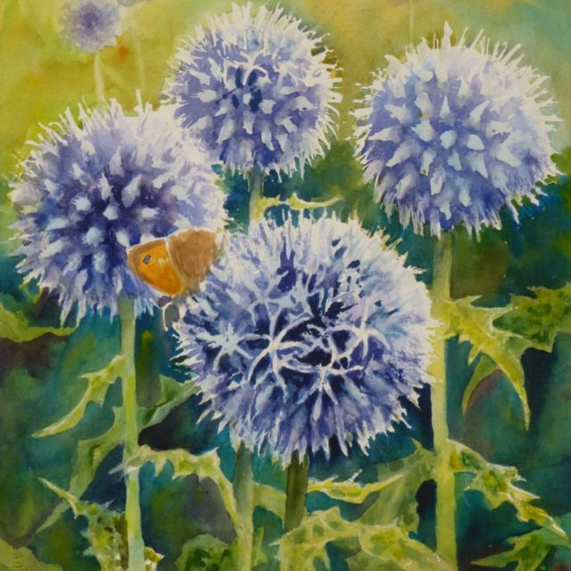 Echinops flowers and Friend butterfly- Floral Watercolour painting
