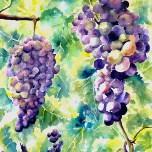 A watercolour painting of bunches of grapes and vine leaves in sunlight