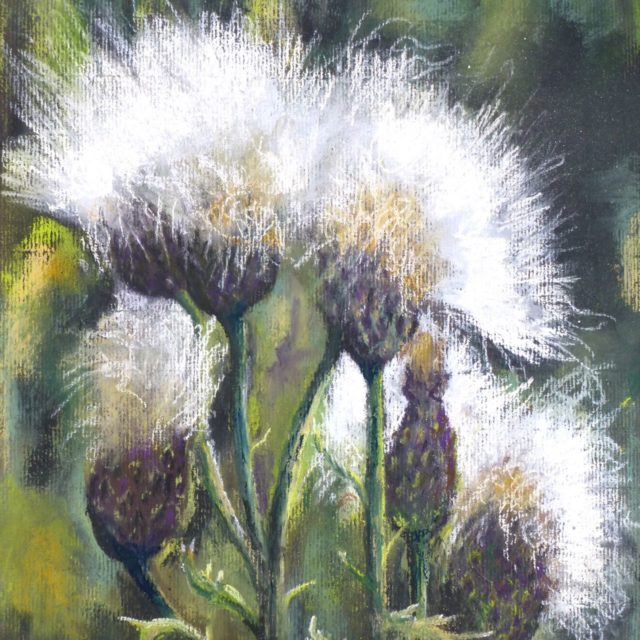A pastel painting of thistle seed heads, stalks and foliage in the sun - pastel painting