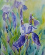 Iris Flowers in sunlight - Watercolour painting