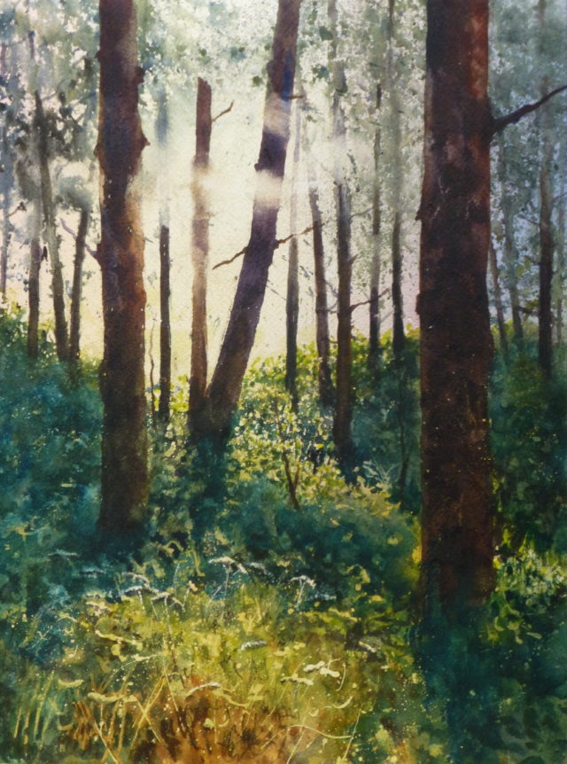 Dancing Light, Fleeting Shadows - a watercolour painting of the pinewoods at Ainsdaale with light sprinkling between the trees