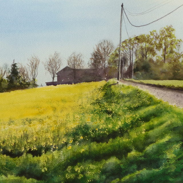 A watercolour painting of Rose Cottage in Plex Moss Land, Halsall, beside a field of oil seed rape and spring trees.