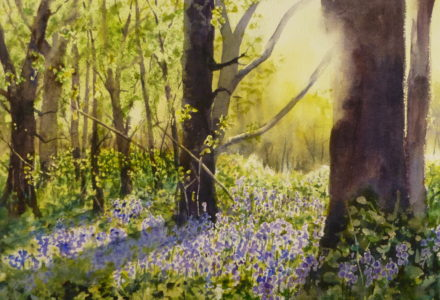 A watercolour painting of a sun filled wooded glade near Formby with light illuminating bluebells and foliage