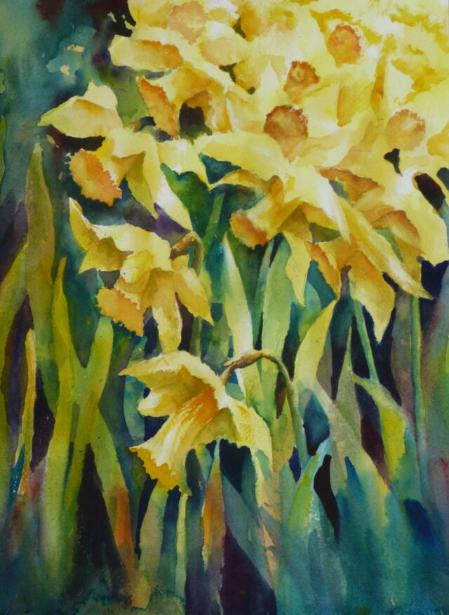 A watercolour painting of a compact cluster of daffodils as if bursting onto the page, portraying the surge of springtime.
