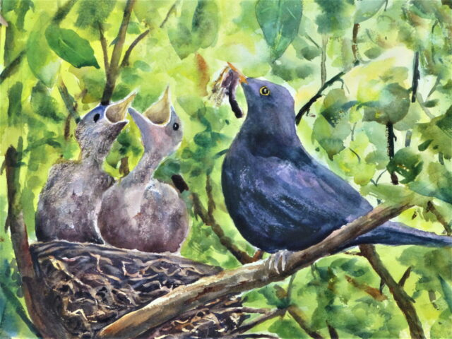 Feed Me, a watercolour painting of a male blackbird bringing worms and bugs to two chicks with their beaks open in the nest