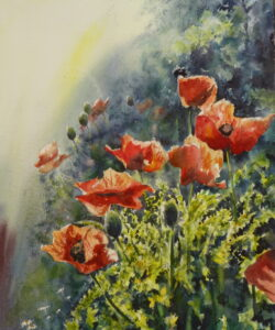 A watercolour painting of red oriental poppies and their spikey green leaves illuminated by a low setting sun and set off against a dark background.