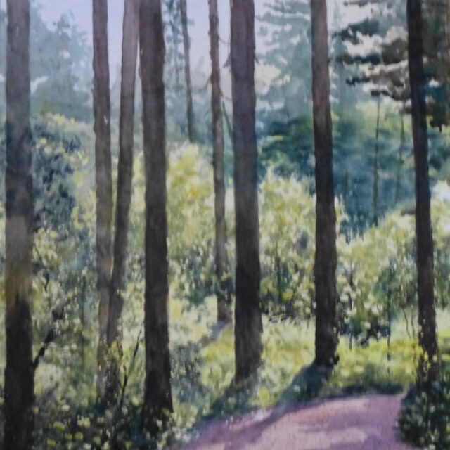 A watercolour painting of the pines and spruces in Ainsdale Woods back lit by bright sunshine and casting shadows across the path.